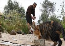Bodrum'un kedilerini 30 yıldır besliyor