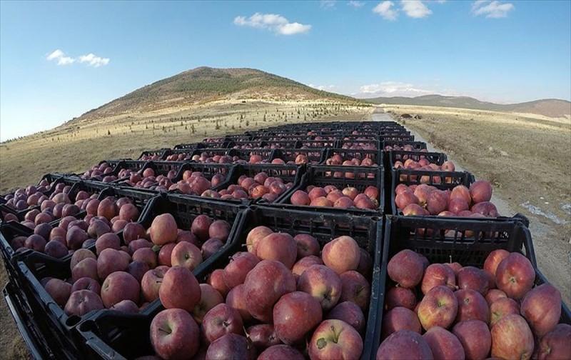 Bu elmaya Ruslar da talip
