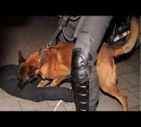 Hollanda'da polis köpekleriyle müdahale
