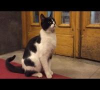 Meclisin kedisi 'Kulis'e milletvekillerinin yoğun ilgisi
